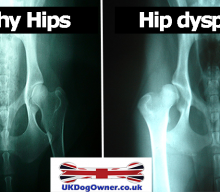 Hip Dysplasia In UK Dogs
