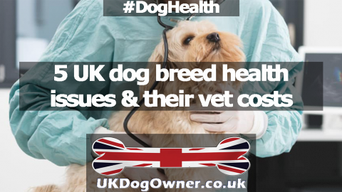 5 UK dog breed health issues & their vet costs