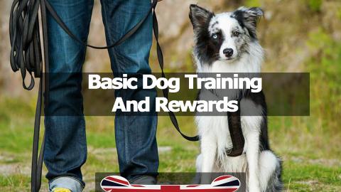 Basic Dog Training And Rewards